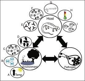 Chytridiomycosis management