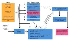 Mechanisms of Sickness Behaviors